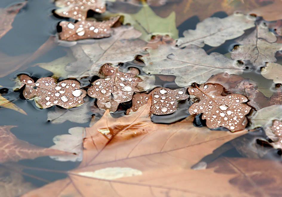 Herbstregen -  - Herbst - autumn