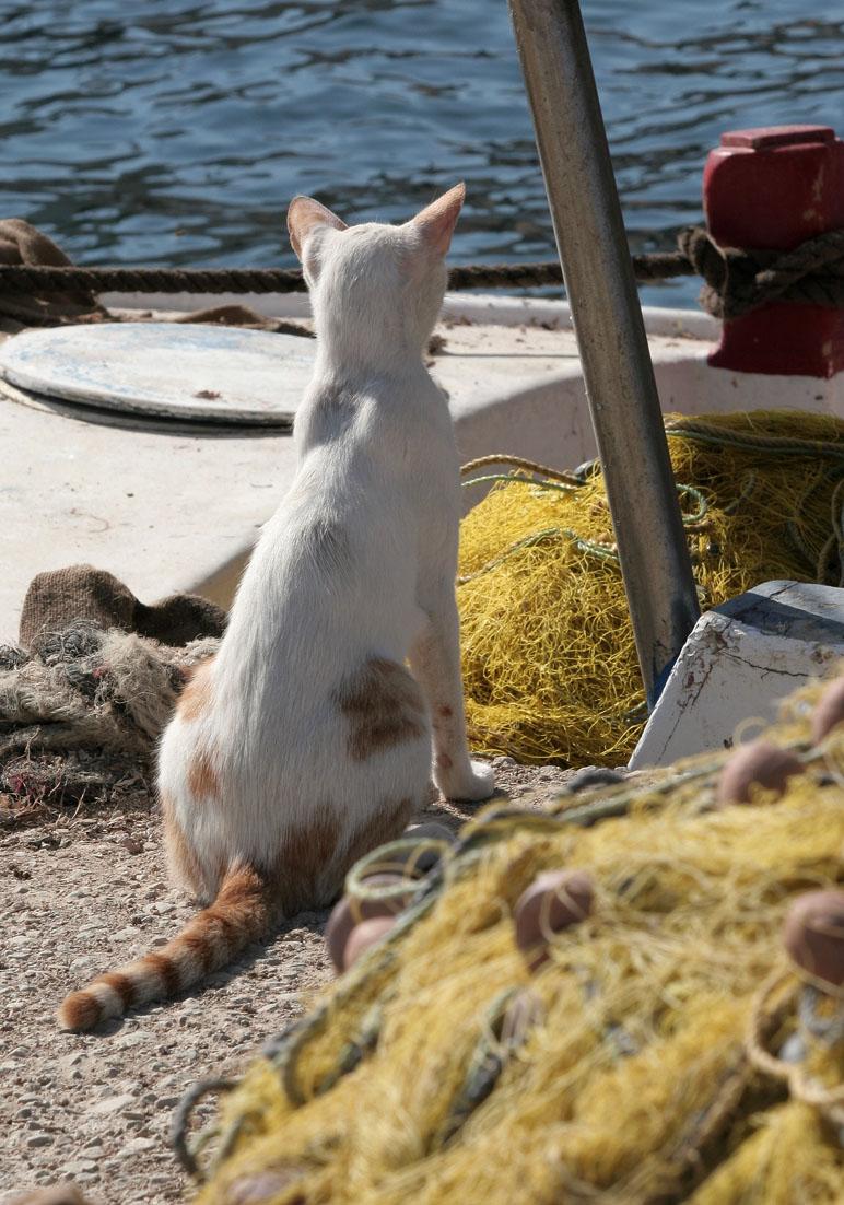 Warten auf Fisch -  - Hafen - port