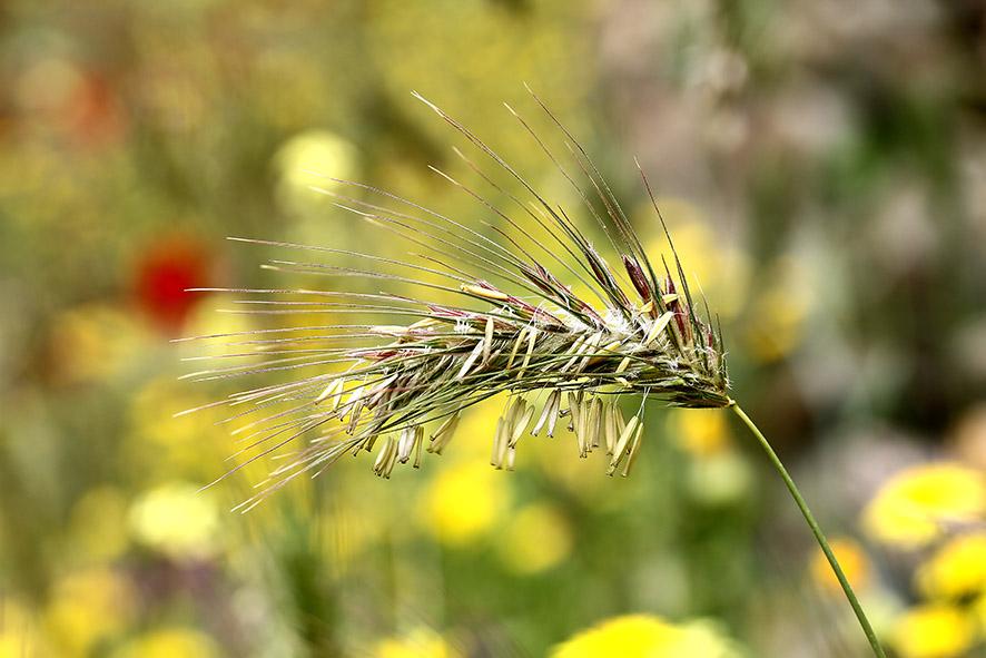 Gras -  - Gräser - grasses