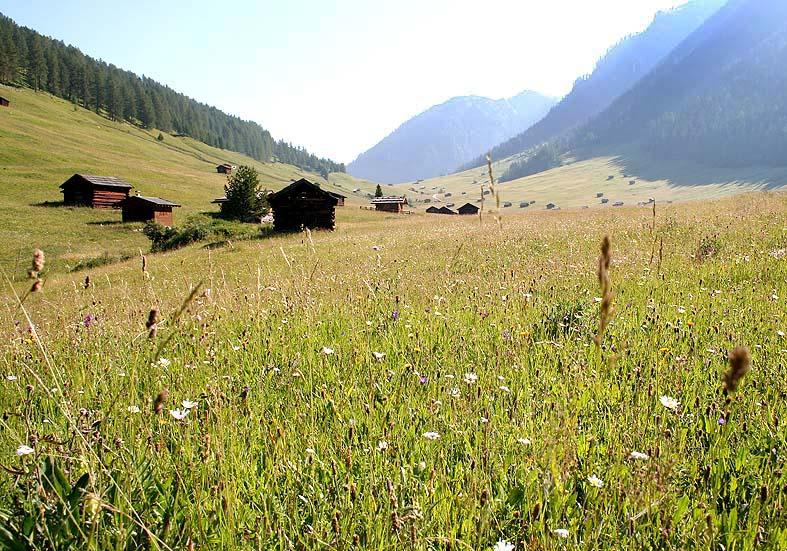 -  - Wiesen - meadows