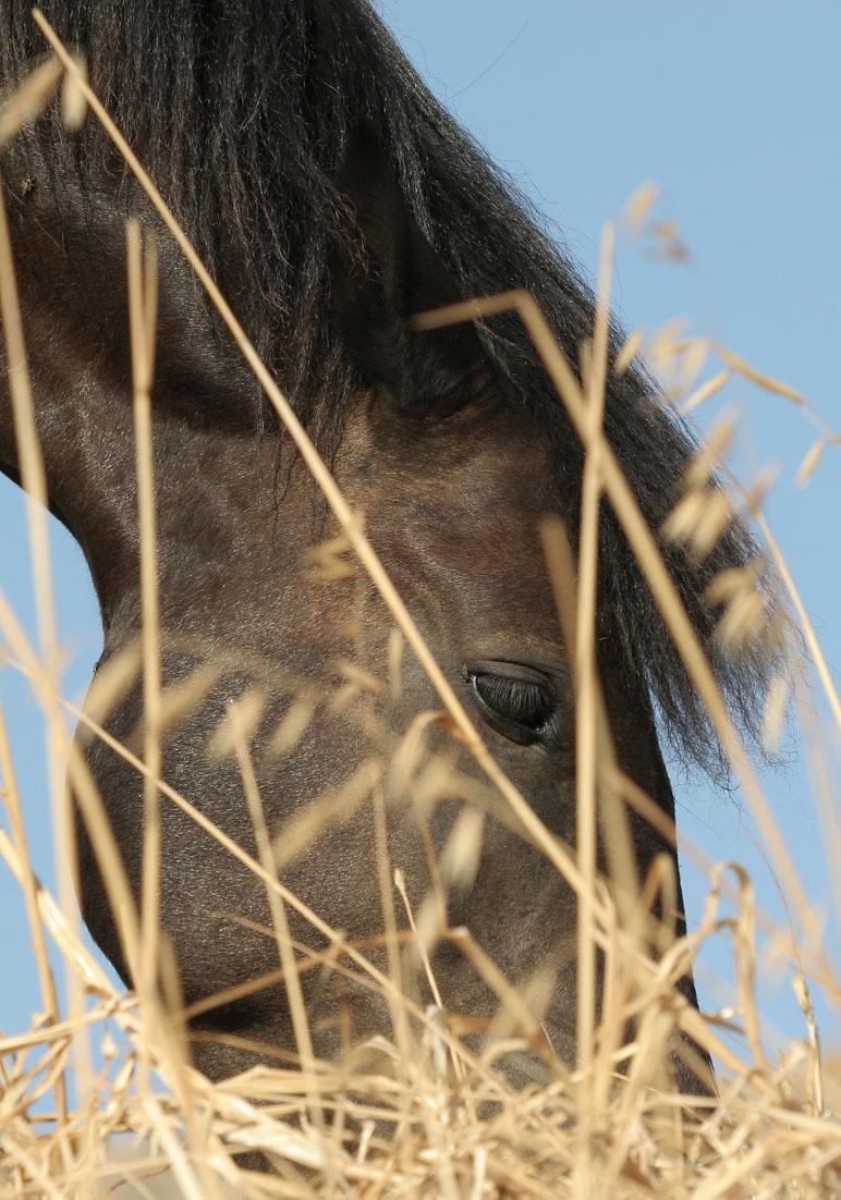 Pferd auf Kimolos -  - Haustiere - domestic animals