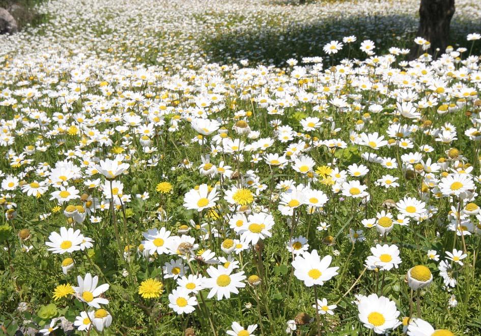 -  - Gras- und Felsfluren - grassy and  rocky terrains