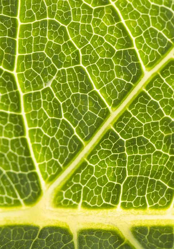 Grünes Blatt -  - Grün - green