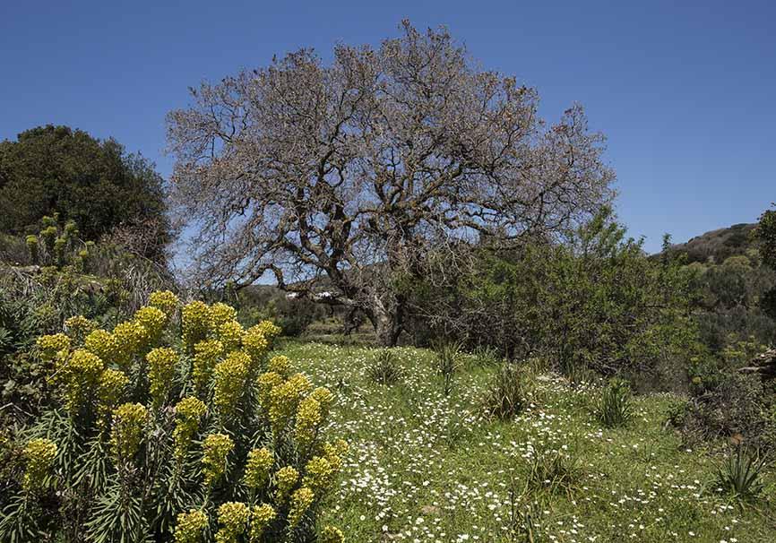 Frühling bei Chalki Naxos -  - Naxos