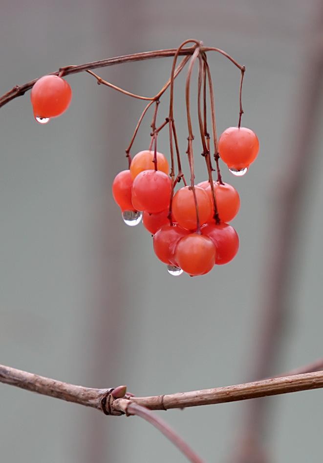 Herbst - Früchte -  - Herbst - autumn