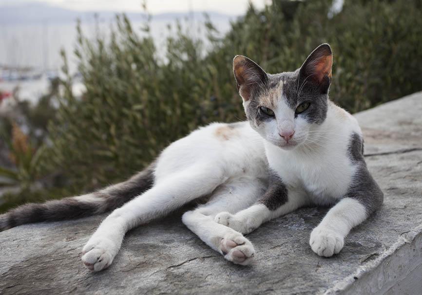 Katze - Naxos - Haustiere - domestic animals