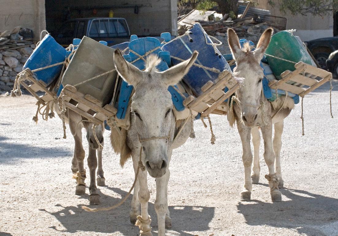 Esel als Bauarbeiter - Langada (Amorgos)  - Haustiere - domestic animals
