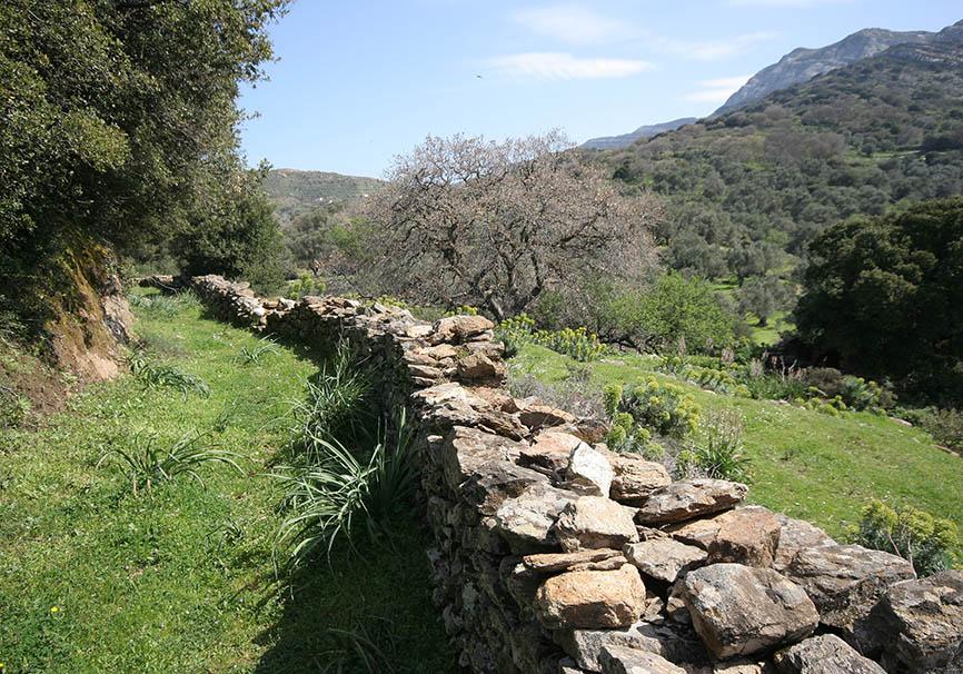 Naxos - Kaloxilos -  - Naxos