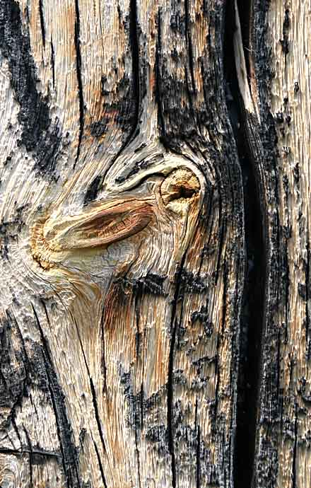 verwittertes Holz -  - Holz - Wood