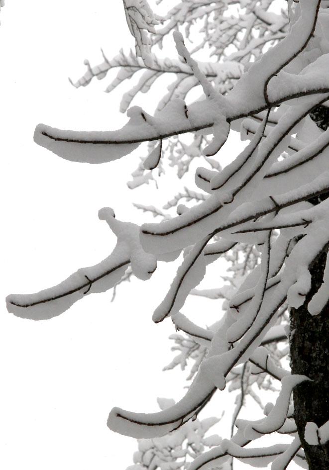 Schneelast -  - Winter