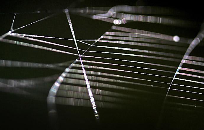 Spinnennetz -  - Spinnennetze - Orb webs