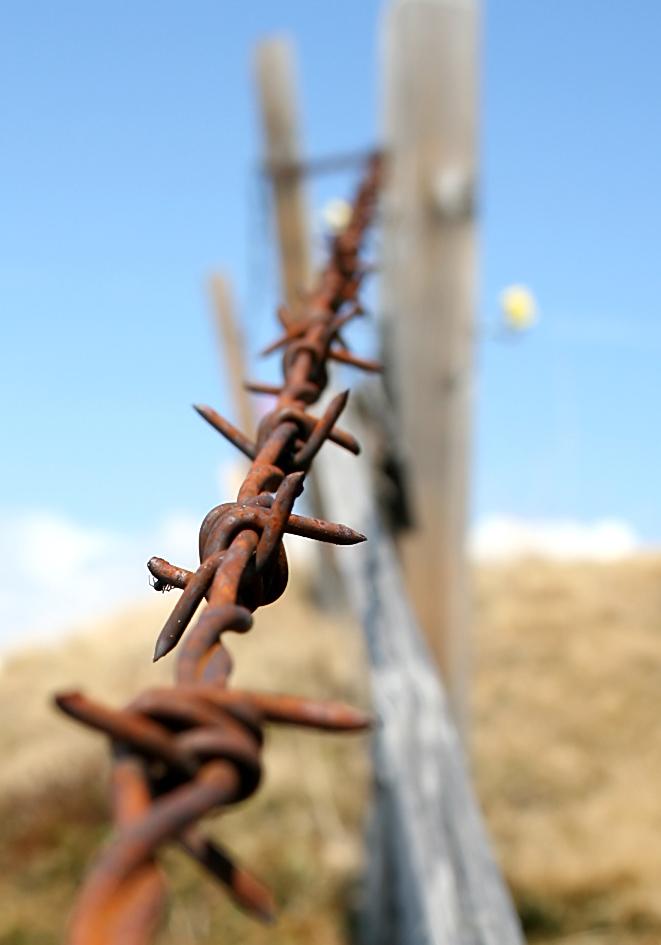 Stacheldraht -  - Zäune - fences