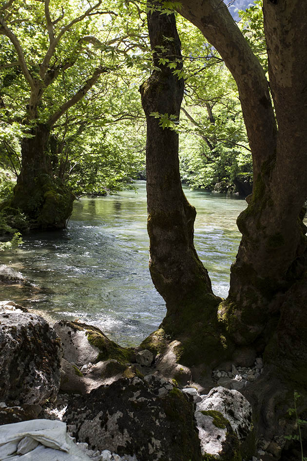 Zagori - Voidomatis river -  - Northern Pindus - Zagori