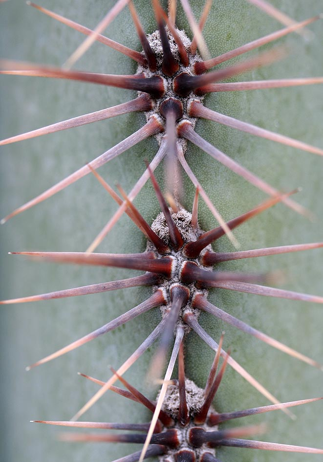 -  - Dornen, Stacheln - thorns, spines, prickles