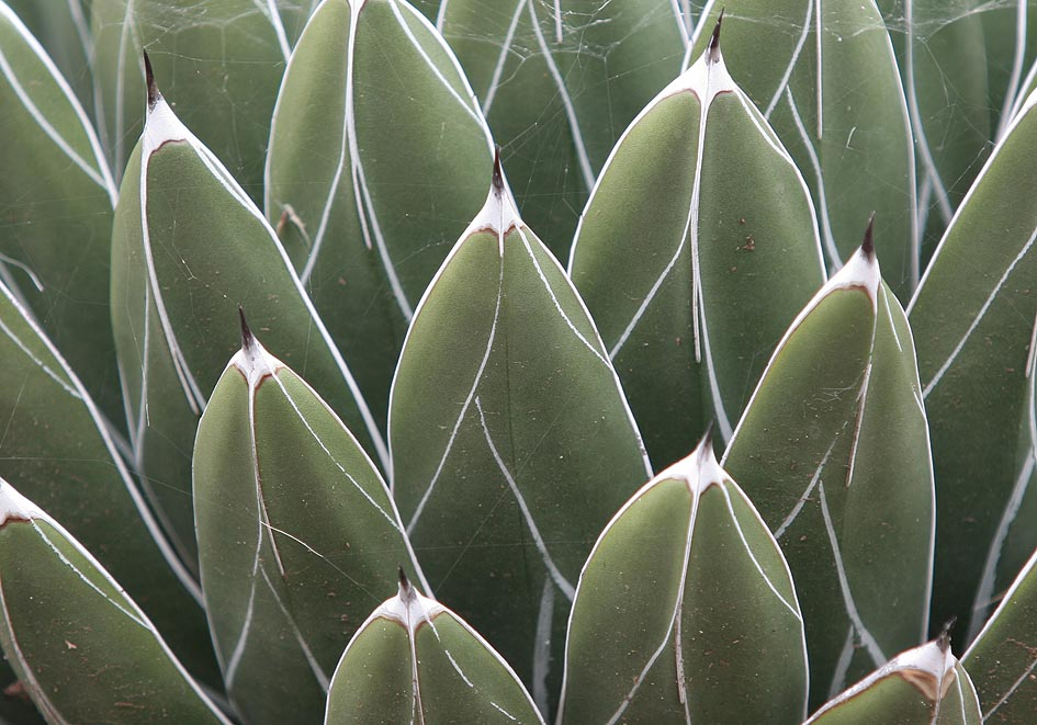 -  - Dornen, Stacheln - thorns, spines, prickles