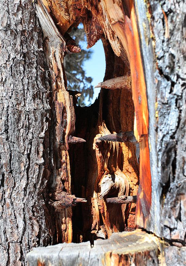 -  - Holz - Wood